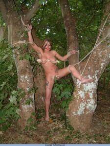 pegged and tied to a tree